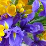 irises_and_freesias_1600x1200