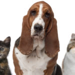 dog_and_cats_paw_plan